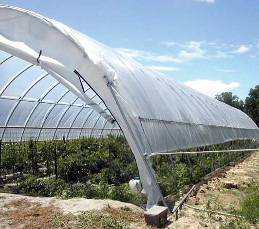 2011 Grant for Seasonal High Tunnels for Food and Other Specialty Crop Production post thumbnail
