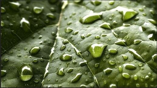 Rainwater Harvesting Online Calculator post thumbnail